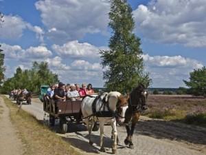 Kutschfahrt durch die Lüneburger Heide (C) Naturpark Lüneburger Heide