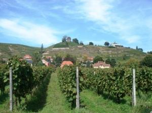 Ausflug nach Radebeul,Blick auf Radebeuler Weinberg mit Spitzhaus und Bismarckturm (C) AugustusTours