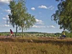 Radfahrer in der Heidelandschaft Lüneburger Heide (C) Naturpark Lüneburger Heide