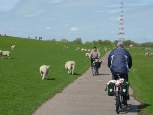 Radfahrer bei Wedel (C) AugustusTours